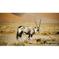 Circuit d'Exception en Namibie - WINDHOEK – PARC NATIONAL D'ETOSHA – GROOTBERG – DAMARALAND – TWYFELFONTEIN – SWAKOPMUND – SOSSUSVLEI – MONTAGNE AUAS - WINDHOEK  Ce magnifique circuit de 12 jours est un voyage exclusif à travers les plus beaux spots de la Namibie. Depuis le fameux Parc National d'Etosha, aux paysages saisissants du Damaraland, en passant par les spectaculaires dunes de Sossusvlei. Vous serez logés dans des hébergements uniques avec beaucoup de charme.