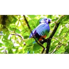 Circuit d'exception au Costa Rica - SAN JOSE – BOCA TAPADA – VOLCAN ARENAL – VOLCAN TENORIO – RIO CELESTE – MONTEVERDE – PARC NATIONAL MANUEL ANTONIO – SAN JOSE  Visiter le Costa Rica, c'est partir pour une aventure inoubliable. Ce magnifique circuit vous fera découvrir une nature omniprésente, à travers la faune et la flore, mais aussi, les volcans, l'océan et les plages. A chacune de vos étapes, vous serez logés dans des hébergements que nous avons rigoureusement sélectionnés pour leur charme.