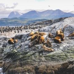 PATAGONIE ET TERRES AUSTRALES - du 06 au 23 mars 2020 - Croisières d'exception vous invite à un merveilleux voyage qui vous conduira sur les traces de grands navigateurs de Buenos Aires à Valparaíso, en passant par des endroits mythiques comme Ushuaia, ville du bout du monde, le détroit de Magellan et les fjords chiliens qui vous charmeront par leur majestueuse beauté. Une croisière particulièrement dépaysante au cœur d'une nature encore vierge. Vous serez accompagné par une équipe francophone à votre service. Lors de ce voyage  exceptionnel, vous bénéficierez aussi des conférences passionnantes de nos invités.