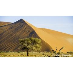 Voyage sur mesure en Namibie - WINDHOEK – WATERBERG – ETOSHA – CHUTES D'EPUPA – CÔTE DES SQUELETTES – GROOTBERG – BRANDBERG – SWAKOPMUND – SOSSUSVLEI  Ce voyage sur mesure est un extraordinaire retour aux sources de la vie. Dans des paysages sauvages, vous découvrirez une faune et une flore riche en diversité. Du Parc National d'Etosha aux Dunes de Sossusvlei, en passant par les Chutes d'Epupa et la Côte des Squelettes, cet itinéraire est idéal pour voyager hors des sentiers battus sans manquer l'essentiel de Namibie.