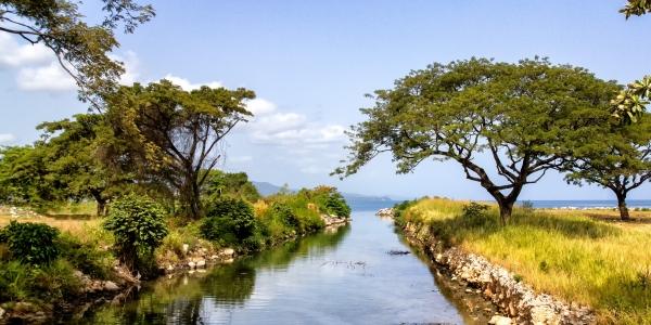 paysage riviere entre végétation