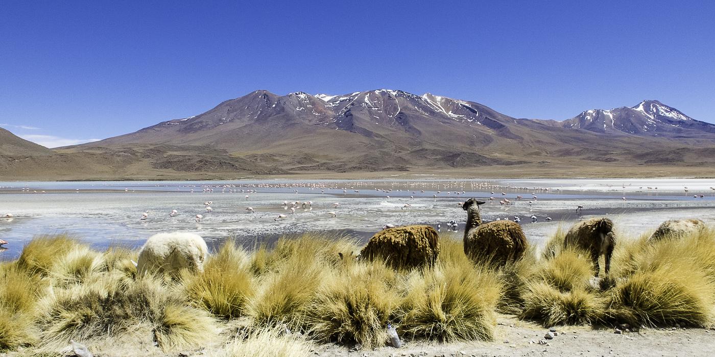 emotika voyages bolivie lama montagne